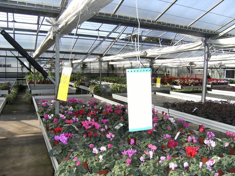 Dans les 1000 m²de serres municipales, 100000 plantes sortent chaque année, sans avoir reçu aucun traitement chimique©Ville de Périgueux