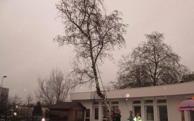 25 bouleaux ont été abattus dans les crèches de la ville©Ville de Limoges