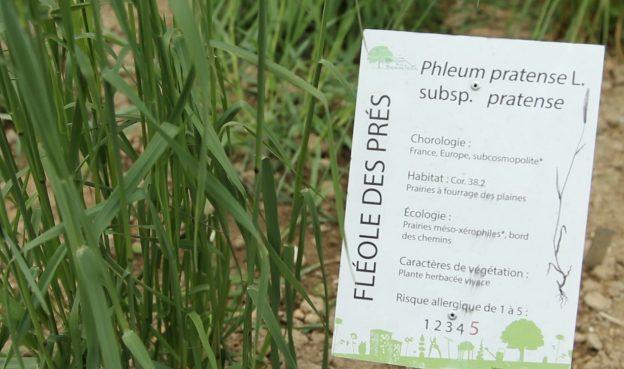 Le pollinarium permet aux personnes allergiques d'adapter leur traitement ©GRAINE Aquitaine