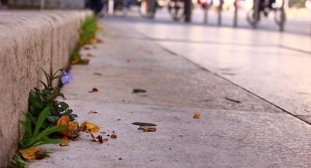 Il va falloir faire accepter le retour « des herbes folles » sur les trottoirs © Bordeaux Métropole