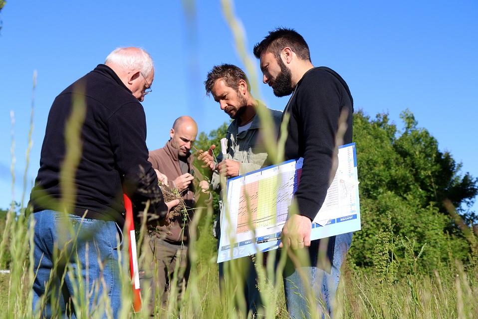 Collecte des espèces allergisantes en milieu naturel à La Rochelle @ Julien Chauvet