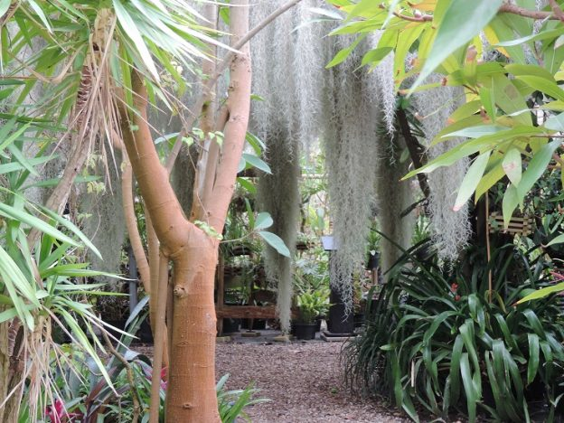 Devant la serre tropicale, nous serons présents pendant la saison © Ecosite du Bourgailh