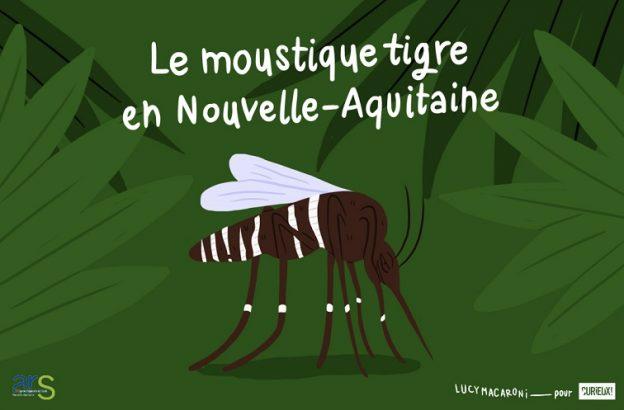 L'illustratrice Lucie Caron alias Lucy Macaroni a dressé le portrait-robot du moustique tigre © Curieux!